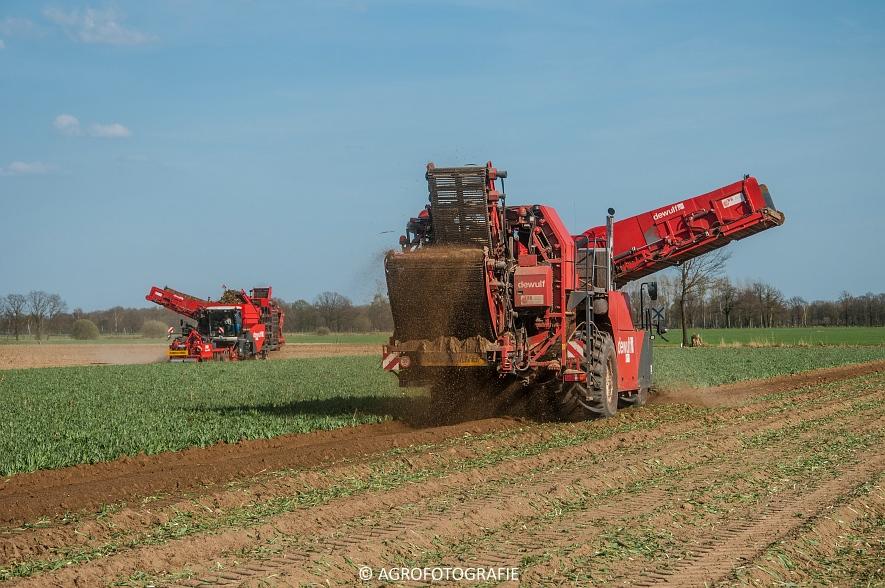 Dewulf RA3060 (Schorseneren, 15-04-2015) (3)