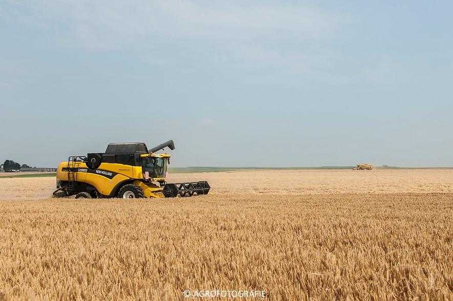 New Holland CX 820 (graan, Steenwinckels, 02-07-2015) (3)