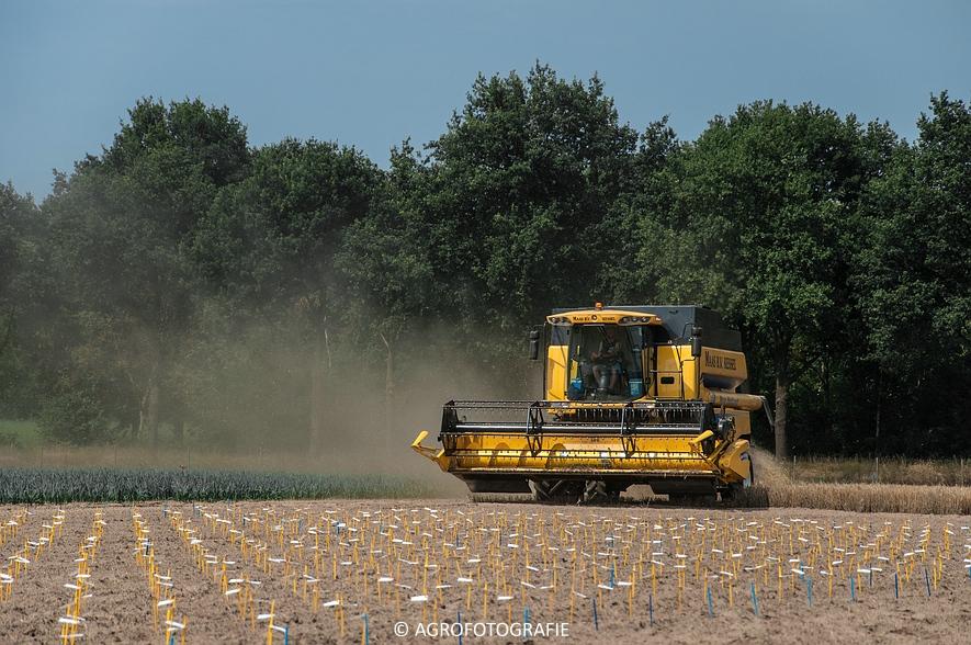New Holland CSX 7050 (Graan, 12-08-2015, Maas BV) (15 van 31)