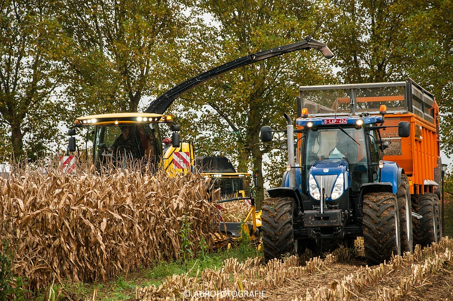 Demo New Holland FR 650 & CR8.80 (Loverjoel, 25-10-2015) (57)