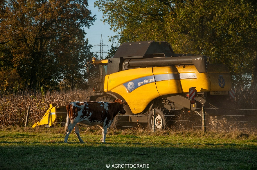 New Holland CX 8050 (Maïs, 01-11-2015) (44 van 45)